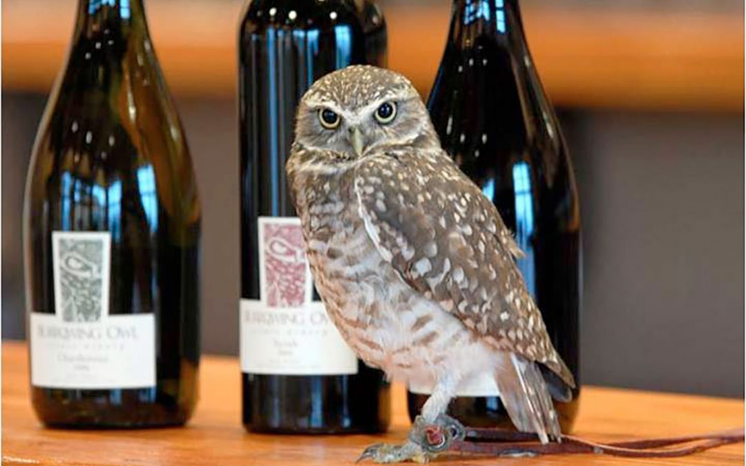 Burrowing Owl Wine Dinner @ Oru for New Year's Eve