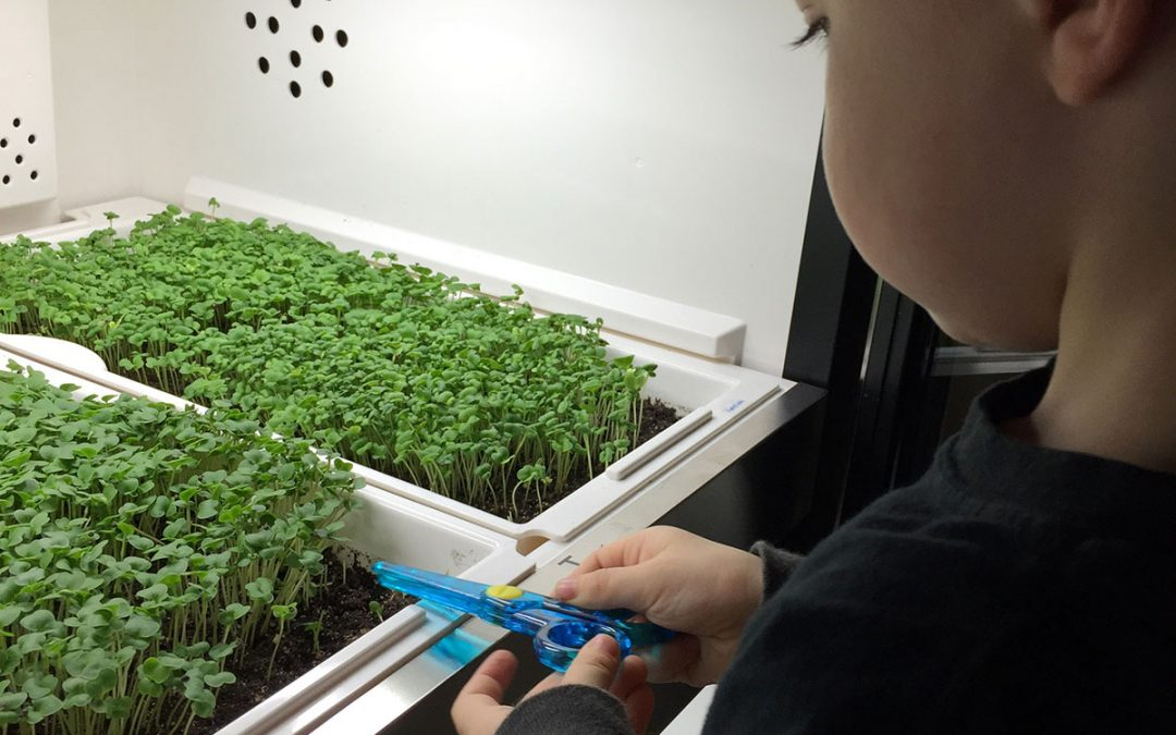 Urban Cultivators at home and in the garden…